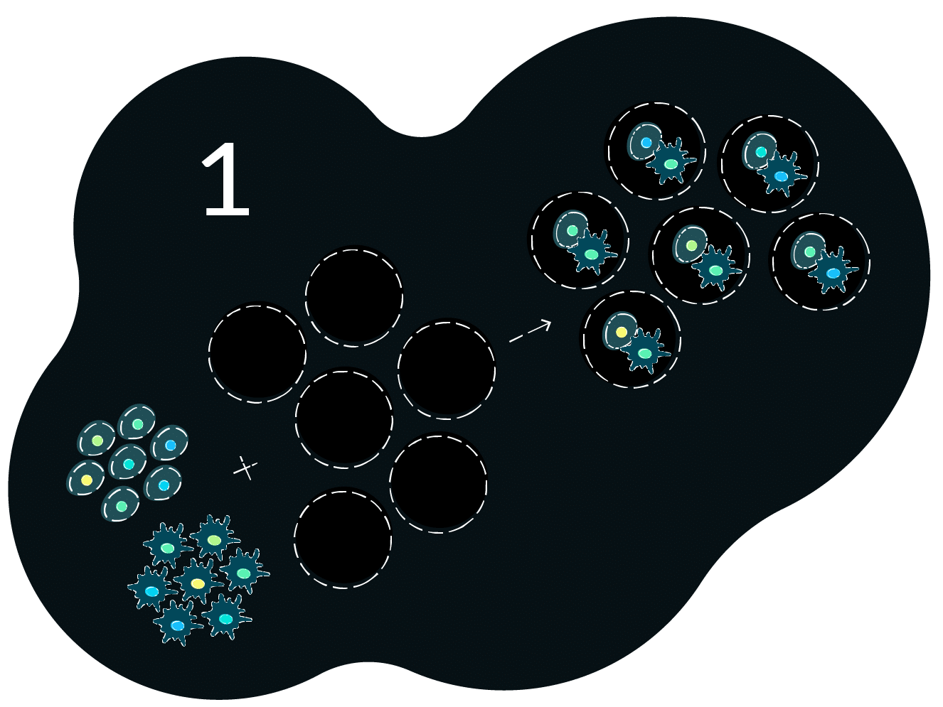 Workflow Image 1 Cell Encapsulation