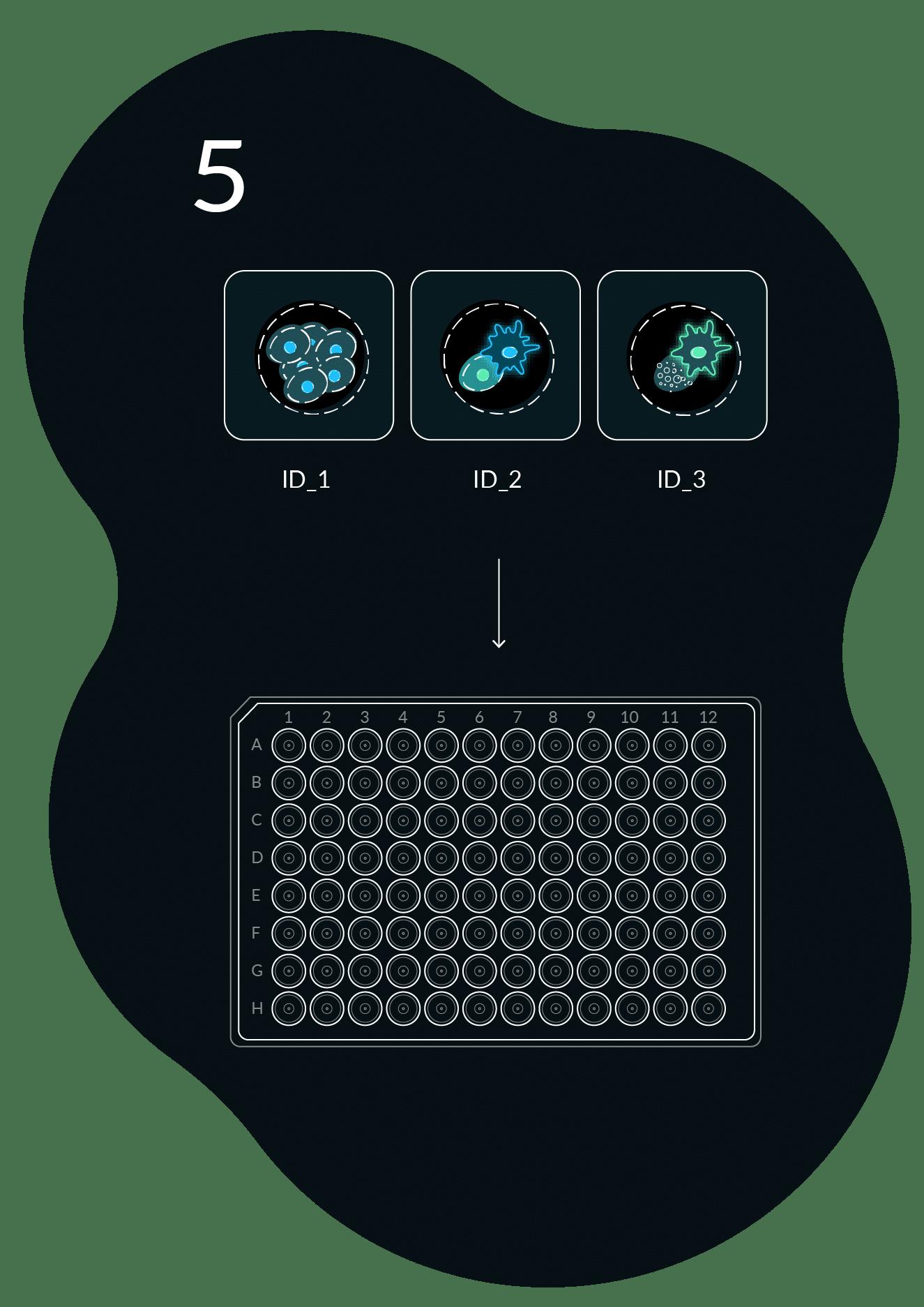 Workflow Image 5 Cell Retrieval